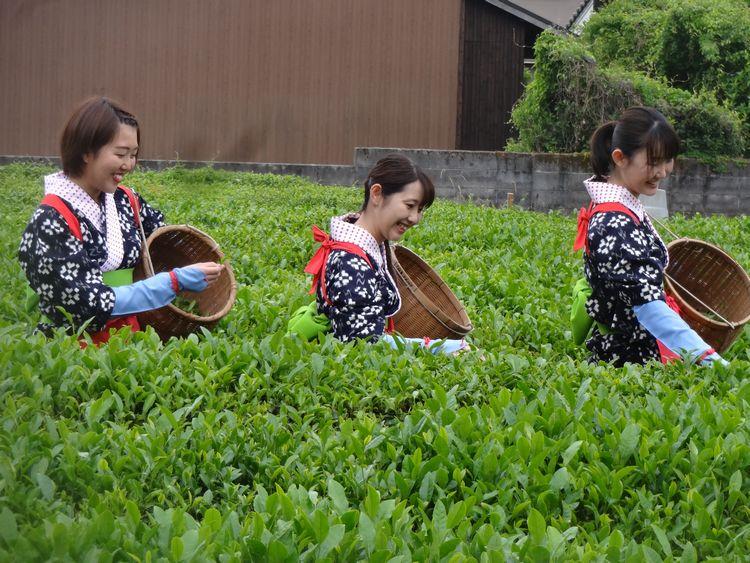 茶祭り02